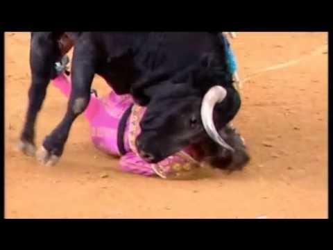 Chifrada de touro arranca pedaço da face de toureiro. FERIMENTO GRAVÍSSIMO.