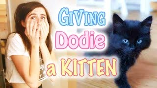 Giving Dodie a Kitten