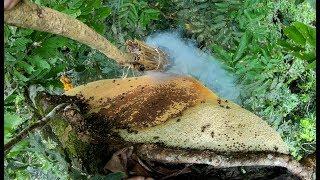How to harvest wild honey sustainable