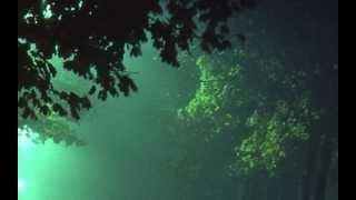Watch Don McLean Falling Through Time video