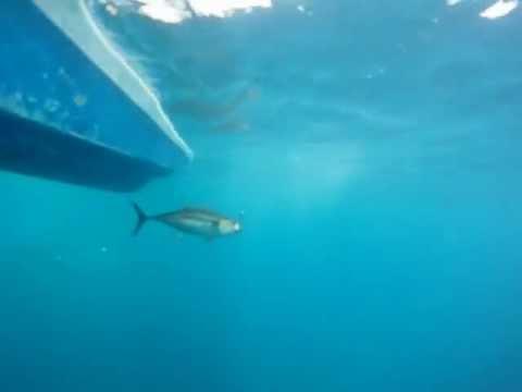 Costa Rica Tuna Fishing thumbnail