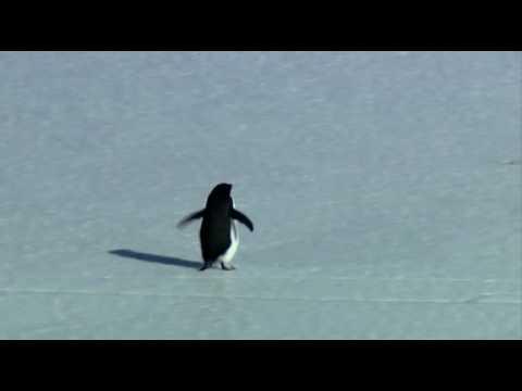 Penguin, Depressed... Werner Herzog