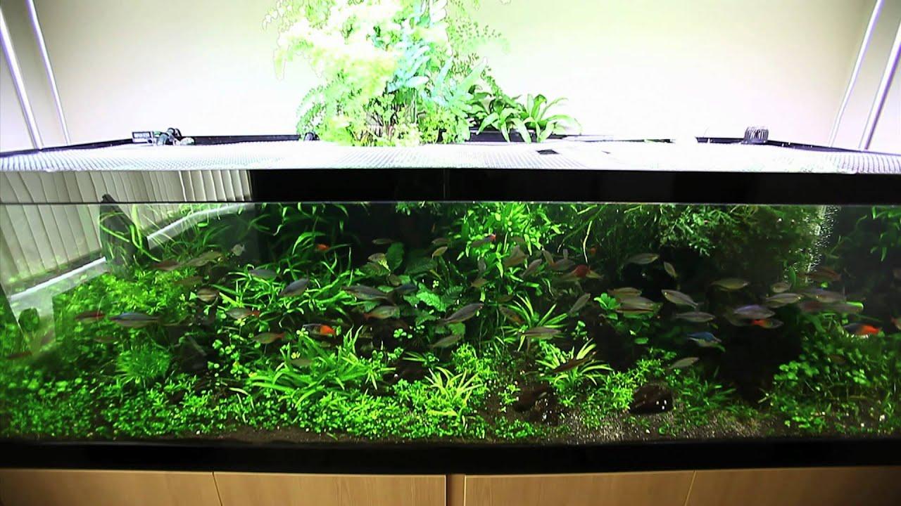 Sanjeev Kumar S Rainbowfish Aquarium Youtube