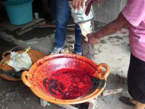 Killing Pollos for the boda in Morelia, Mexico