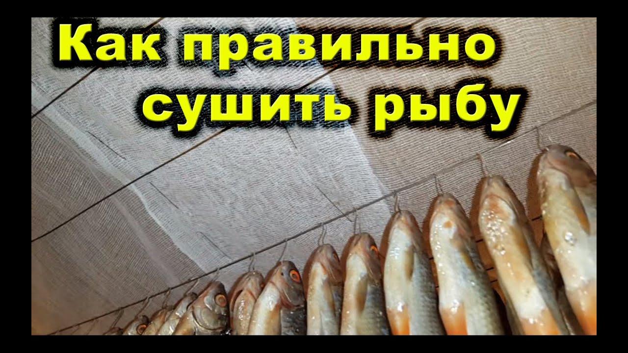 Как правильно сделать засолку рыбы