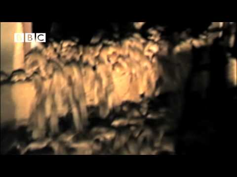 Unbelievable! - Plague of Millions of swarming mice in Australia - Swarm (David Tennant)