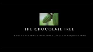 The chocolate tree story. Cocoa Life India