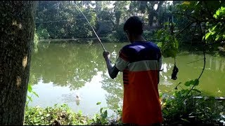 Village Fishing - Fish Catching with Hook - Real Fishing Video