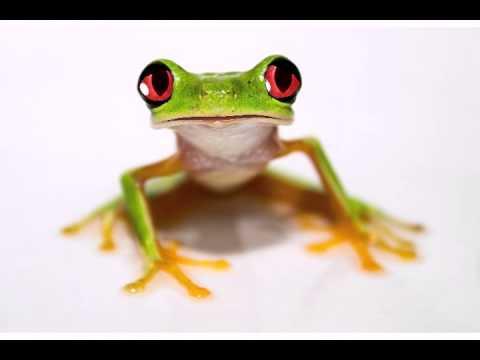 Happy Birthday To You - Funny Birthday Songs (Tango The Tree Frog)