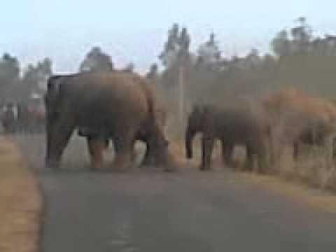 Junglee Elephants in Hat Asuria Shoot by Babum