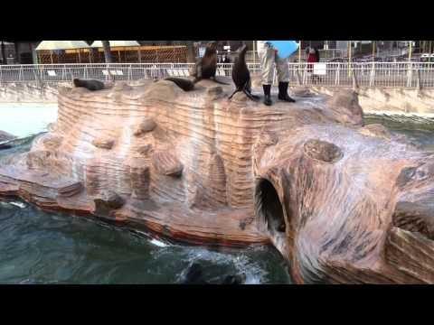 アシカの食事 東山動植物園 2010.12.10
