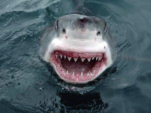 Laughing Shark!