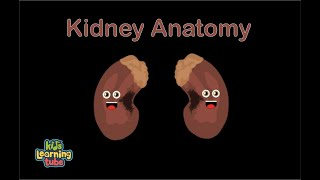Kidney Anatomy Song for Kids/Kidney Anatomy for Children/Kidney Anatomy