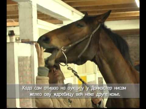 Konji ponovo jure Ben David.wmv