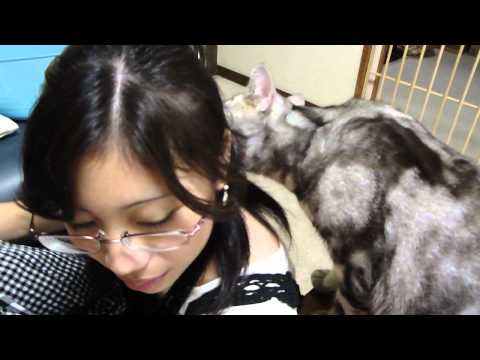 姪っ子をすんすん♪ - A cat and niece.