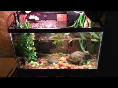 Turtle Aquarium Update - 10 gallon setup with two turtles - YouTube