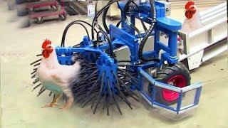 Çiftlik'ten Sofraya! Tam Otomatik Akıllı Makinalarla Şaşırtıcı Tavuk Yakalama Toplama Ve Sonrası..