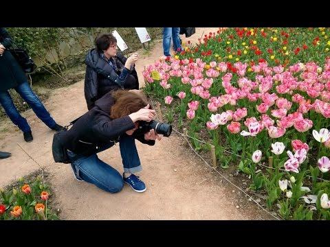 ПАРАД ТЮЛЬПАНОВ 2016| Никитский ботанический сад| Крым 2016