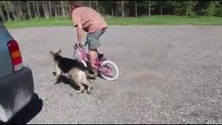 Real Life | Bike Riding  FAIL | Solid K9 Training Dog Training