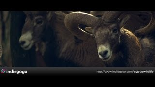 CYPRUS NATURE & WILDLIFE DOCUMENTARY TEASER