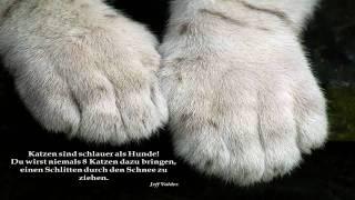 Englische Zitate Tiere Leben Sprüche