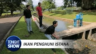 Vincent Takjub Lihat Ikan Ternak Presiden Jokowi