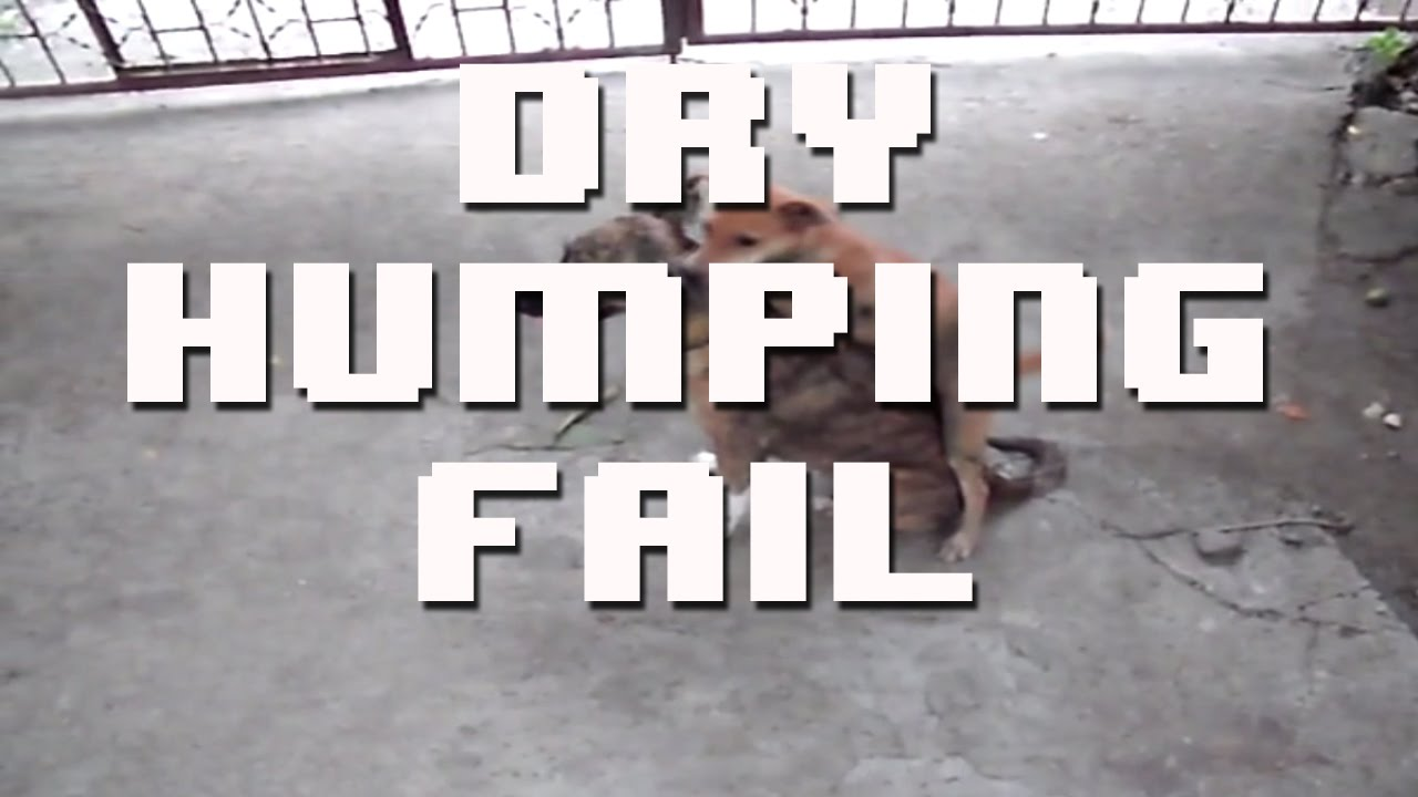 [HILARIOUS DRY HUMPING PUPPY] Video