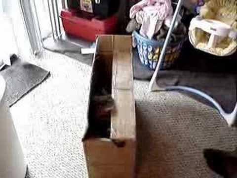 Pop goes the weasel: Mr. Kitty attacks Nietzsche Video