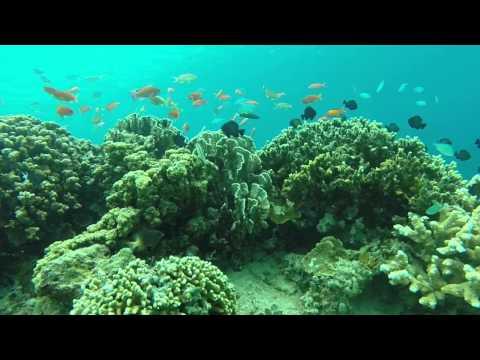 Snorkeling In Gili Trawangan, Lombok, Indonesia Filming With Gopro Hero 3  Silver
