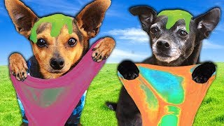 Letting our DOGS Pick our MYSTERY SLIME – Challenge | PawZam Dogs