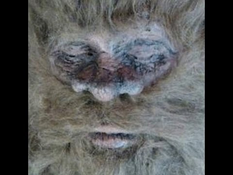Bigfoot Found and Killed