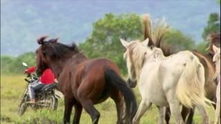 Domingo Espetacular revela imagens inéditas de cavalos selvagens ameaçados de extinção