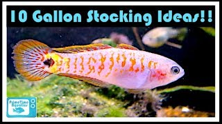 10 Gallon Fish Tank Stocking Ideas: Have You Thought About These Fish?