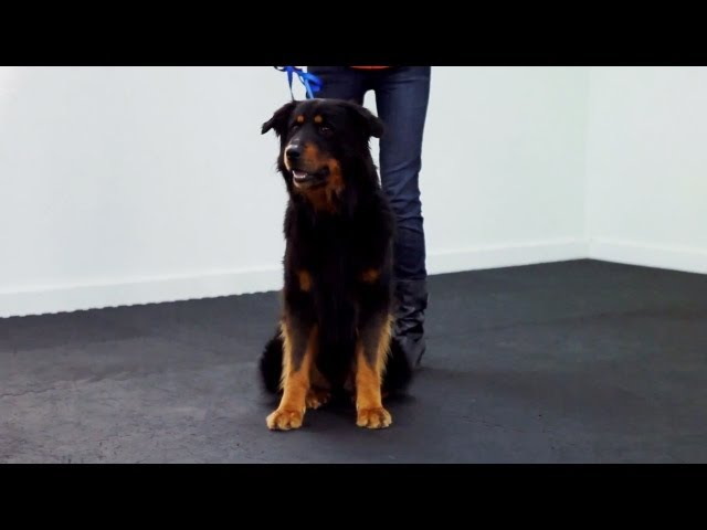 Training a Dog to Heel | Teacher's Pet With Victoria Stilwell