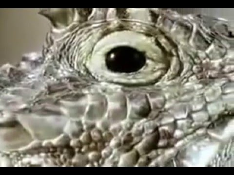BBC Живая Природа Звери Хулиганят. BBC Animals Behaving Badly
