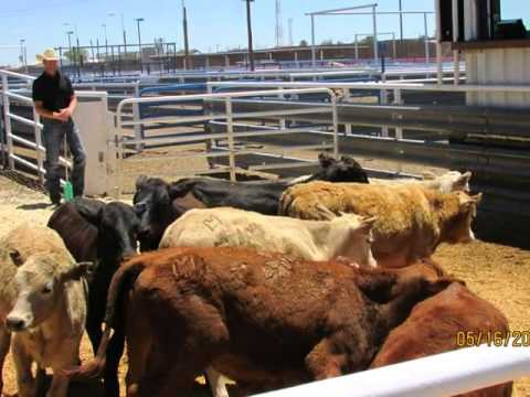 Columbus Livestock Auction May 2015 1 of 2