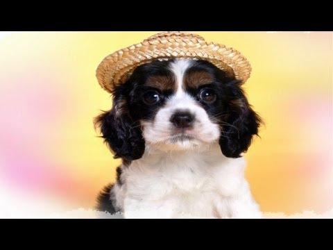 Собака друг человека и др позитив интересные факты