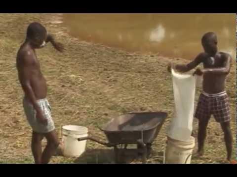 Abc Of Fish Farming Fish Farming In Nigeria Using Earthen