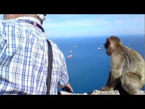Gibraltar - Tourist Guide feeding apes and explaining surrounding