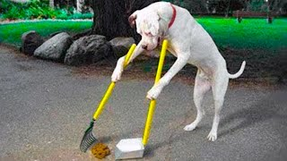 15 Best Trained & Disciplined Dogs in The World!