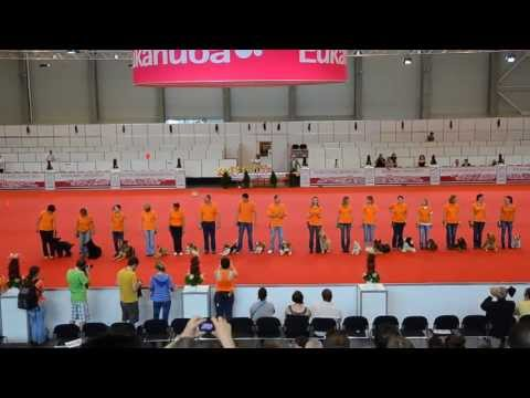 Tükör Bemutatócsoport - Mirror Method Performance Team: World Dog Show 2013