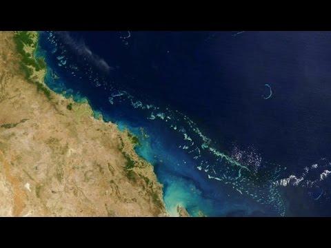 Australia's Great Barrier Reef hit by 'worst' bleaching