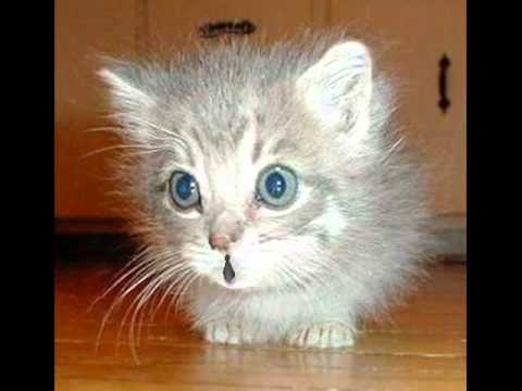 Kittens Birthday Song Funny Birthday Song Mewmew