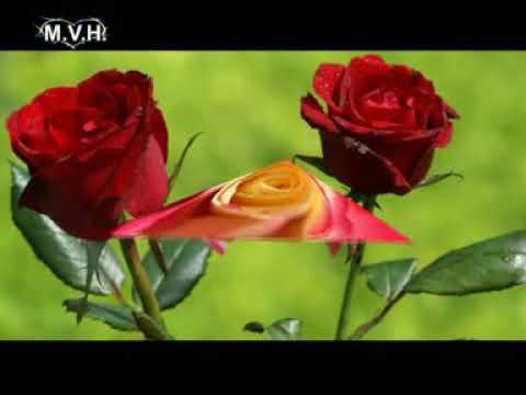 Música Cristiana - Yesenia Flores - Jesús Mi Guardaespaldas.