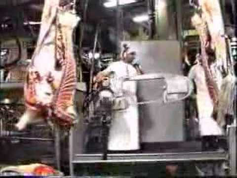 Australian Beef Slaughterhouse SBA Foods (Gilbertsons)  (part 10 -10)
