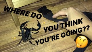 GIANT SCORPION escaped in your room ~ WHERE WILL IT GO ??!