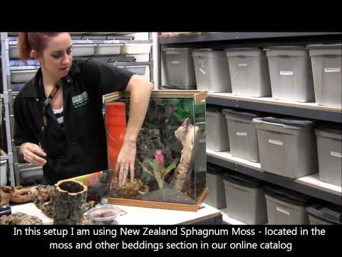Setting up Ornamental Tarantulas