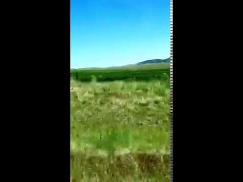 Montana Roadside 🌿