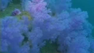水中のお花畑