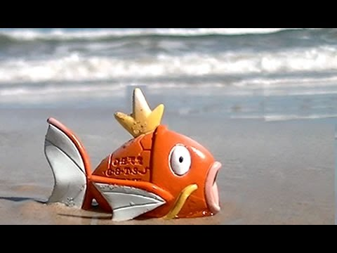 How To Keep A Pet Pokemon Magikarp In Real Life!